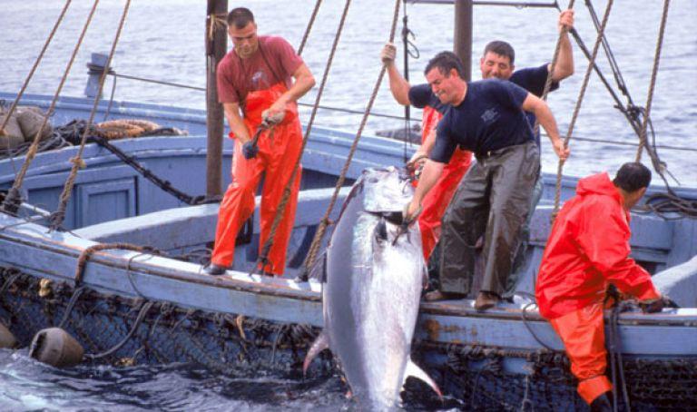 L'Algérie élève sa part de thon à 1419 tonnes
